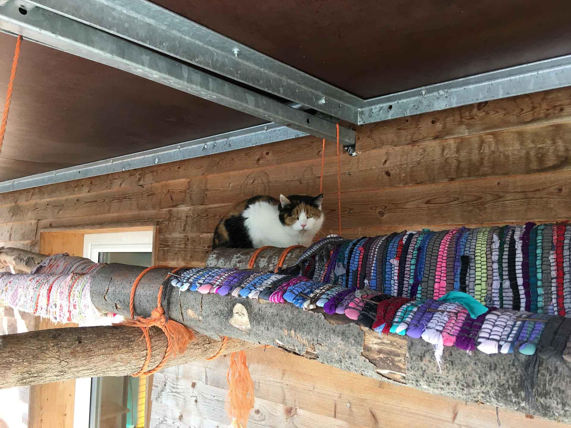 Die Katzen dürfen sich im Vorarlberger Tierschutzheim über ein schönes Katzenzimmer freuen.