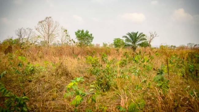 Gebiet in Togo vor Baumpflanzaktion